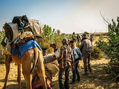 Camel Safari (Synghan) Tags: boy india canon village desert indian goat powershot safari camel goats jaisalmer manju a630