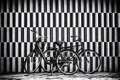salt and pepper (Tania Sonnenfeld) Tags: urban monochrome bike bicycle copenhagen parking transport bikes firstsnow cykel