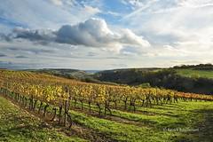 Hautes-Côtes (patoche21) Tags: france landscape vineyard nikon scenery 21 burgundy paysage bourgogne vignoble vigne 2470mm côtedor fussey d700 capturenx2 patrickbouchenard