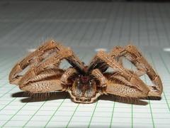 Sparassidae Huntsman spider DSCF7008 (Bill & Mark Bell) Tags: exmouth westernaustralia australia geo:town=exmouth geo:state=westernaustralia geo:country=australia geo:lon=11425453egeolat2217752sgeoalt8m 11425453e2217752salt8m taxonomy:kingdom=animalia animalia taxonomy:phylum=arthropoda arthropoda taxonomy:class=arachnida arachnida taxonomy:order=araneae araneae taxonomy:superfamily=sparassoidea sparassoidea taxonomy:family=sparassidae sparassidae taxonomycommonnamehuntsmanspider huntsmanspider spider animal fauna