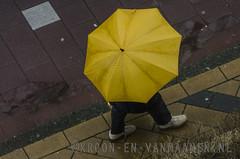 A view from the room (Erwin van Maanen.) Tags: winter holland january streetphotography documentary daily enero invierno januari documentaire dagelijks straatfotografie aviewfromtheroom nikond7000 erwinvanmaanen kroonenvanmaanenfotografie wwwkroonenvanmaanennl