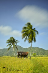 a sunny day.. (TOREX PHOTOGRAPHY) Tags: clouds nikon malaysia paddyfield perlis nd400 d7100 torexphotography