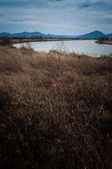PhoTones Works #4676 (TAKUMA KIMURA) Tags: mountain nature river landscape scenery bark  grassland    kimura rd1     takuma   photones
