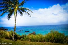 Oahu, Hawaii (Nenette Fronda Gajisan Chong) Tags: sea vacation nature hawaii peace waikiki oahu coconut calm northshore leisure aloha pleasure beautifulnature nenettegajisanchong