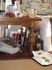 IMG_8494 (SassyKnits) Tags: fanny pitbull basenji brindle adopted mixedbreed jac shelterdog yarnshop jerseyanimalcoalition trilliumyarns