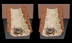Hunting In The Trenches - Parallel 3D (DarkOnus) Tags: macro closeup manipulated insect lumix spider stereogram 3d jumping pennsylvania arachnid tan parallel stereography buckscounty jumpingspider platycryptus undatus dmcfz35