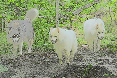 """Left To Right - Zarro, Jag, & Chase • <a style=""""font-size:0.8em;"""" href=""""http://www.flickr.com/photos/96196263@N07/14235556502/"""" target=""""_blank"""">View on Flickr</a>"""