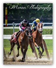 Kid Cruz (EASY GOER) Tags: horses horse ny sports racetrack race canon track competition racing 7d athletes athlete sporting 56 thoroughbred equine dwyer thoroughbreds belmontpark 400mm