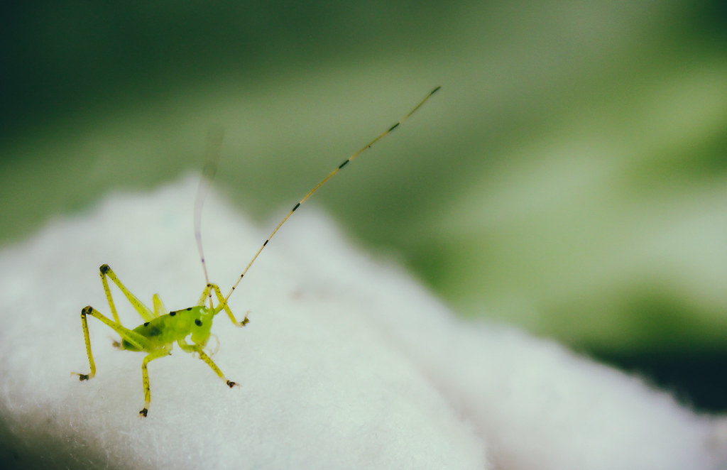 macro green closeup bug garden insect close natural background antenna