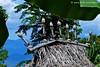 Ancestor  symbols, Kampung Lama, Bau Pukang, Jontona, Lembata, NTT Indonesia (Sekitar) Tags: indonesia island traditional ancestor lama kampung bau pulau rumah ntt adat rav desa lessersundaislands nusatenggaratimur earthasia pukang kleinesundainseln jontona