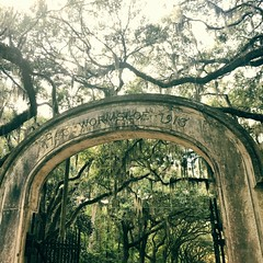 Wormsloe Arch (peachy92) Tags: clarendon iphone 2016 savannah chathamcountygeorgia chathamcountyga chatham chathamcounty iphonegraphy iphoneography ga georgia us usa unitedstates unitedstatesofamerica savannahga savannahgeorgia instagram instagramapp square georgiadepartmentofnaturalresources georgiastateparks wormsloe wormsloestatehistoricsite wormsloehistoricsite iphone6