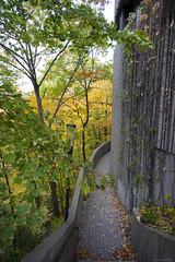 DSC07404 (sesquiotic) Tags: foliage fallfoliage ontariosciencecentre