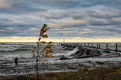 20161022-DSC_1841 (the Mack4) Tags: 2016 fall lakeontario newyork niksoftware october water webster websterpark bird clouds leaves pier waves wind