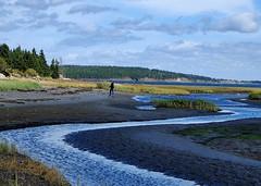 Where is he? (halifaxlight) Tags: canada novascotia rosebay beach stream grasses trees autumn fall landscape figure ocean clouds