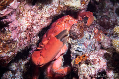 DSC01918-9.jpg (chasingphil) Tags: southeastasia nightdive similanislands diving thailand