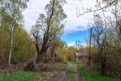 IMG_7100-Edit.jpg (jeepeg!) Tags:    landscape street   plant road tree      nature               ukraine ua
