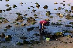 sea farming (*F~) Tags: caminha portugal river people human man farming food harvest work life dailylife