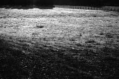 Le pr blanc  Bretoncelles, Orne, octobre 2016 (Stphane Bily) Tags: stphanebily bretoncelles orne bassenormandie noiretblanc blackandwhite bw nb