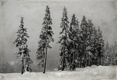 Winter's Silence (WoodlandsPhotography) Tags: winter snow landscape trees season frozen cold beautiful scenic misty skiresort alpine nature mountain resort slope top outdoors activity holiday vacation wintry freezing ice snowy downhill seasonal aerial mountains leisure white gray grey freeze frost fun weather extreme ridge brown texture horizontal vintage worn icy mountwashington comox britishcolumbia comoxbc vancouverisland canada canadian marilyn wilson