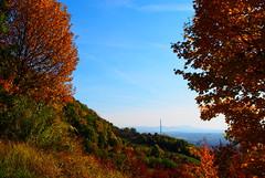 égretörők / into the sky (debreczeniemoke) Tags: ősz autumn táj land tájkép landscape színes színpompás colorful október october fa tree erdő forest rét meadow kémény chimney nagybánya baiamare olympusem5