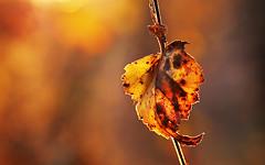 Autumn palette (Ingrid Ugussi Vukman) Tags: autumn colors northgermany niedersachsen germany leaf yellow warmcolors deutschland nature lovenature