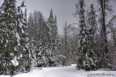 Just Snow (jimgspokane) Tags: mountspokane snow washingtonstate