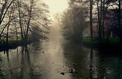 Ein nebliger Wintertag (cammino5) Tags: fog nebel spiegelungen reflections 2015 dezember schaippach sinntal gemnden