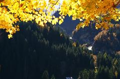 Lukmanier (balu51) Tags: landschaft berge tal pass strasse tunnel wald tannen grn ahorn gelb laub farbig herbst disentis lukmanier graubnden oktober 2016 copyrightbybalu51