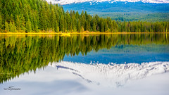 Mount Hood (Ton Trn - Freelance Photographer) Tags: oregon toantranphotographer serene outdoor water reflector mountain mounthood trees snow