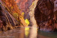 Fall in The Narrows (OJeffrey Photography) Tags: znp zionnationalpark ut utah thenarrows sunlight fallcolors fall river virginriver ojeffrey ojeffreyphotography jeffowens nikon d800