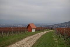 In den Weinbergen - Blick auf Gau-Algesheim und Ingelheim (Belichtungszeit: 1/160, Blende: 5,6, Brennweite entsprechend 35 mm-Kleinbild: 69)