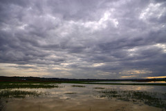 Padule di Fucecchio (henryark) Tags: outdoor padule water sky swamp tuscany nikond750 italy nikon tripod angle wild florence wildangle enrico nannini henryark clouds cloudy d750 nuvoloso nuvole dirtywater italia acqua toscana
