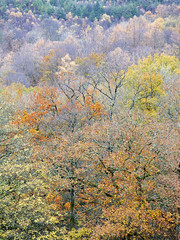 Layered (mcb photography) Tags: wales cymru tree forest wood woodland autumn season fall mist rain clwyd layers wwwmcbphotographycouk mikebarber mcbphotography
