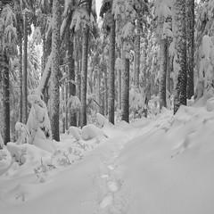 A World to Myself (Scott Withers Photography) Tags: cathedralridge mthood oregon sonya7rii sonyfe2470mmf28gm