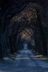 Tunnelblick (Fotos aus OWL) Tags: morgen kalt kopfsteinpflaster strase allee landschaft senne winter