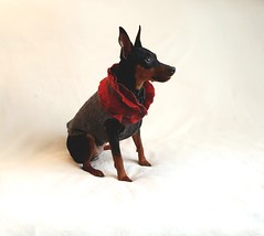 handmade min pin sweatre (julializard) Tags: dogsweater minpin pinscher dogclothing dog smallbreed