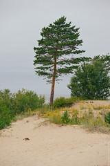 DSC_2063 (engine9.ru) Tags:     sea shore plants