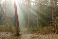 Sunrays (genf) Tags: zeist bos zeisterbos zonnestralen sun rays sunrays zon zonlicht licht herfst autumn sony a77
