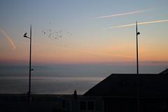 Birds & Speedbirds (petersnapsnap) Tags: birds beach aircraft pigeons scenic planes contrails dawn