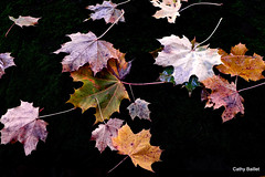 Les feuilles mortes (Cathy Baillet) Tags: automne nature feuille naturemorte france yonne appoigny bourgogne cathybaillet campagne 2016