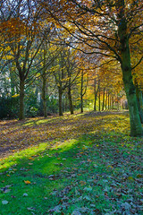 Tree-line (Keith (foggybummer)) Tags: houseofdun pathway treeline autumncolours light sinshine