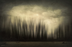 #Follow The Sun (graceindirain) Tags: fly forest trees wind fog birds texture graceindirain
