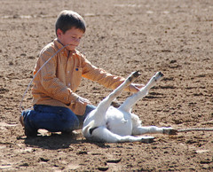 roping (tammeperry) Tags: kids cowboy tie goats rodeo roping playday