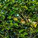 "Anu-Branco vigiando a área do Parque Estadual Acaraí • <a style=""font-size:0.8em;"" href=""http://www.flickr.com/photos/39546249@N07/9235859644/"" target=""_blank"">View on Flickr</a>"