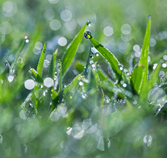 Bokeh Wonderland (Elizabeth_211) Tags: morning macro green grass bokeh tennessee dew waterdrops lowangle jacksontn westtn sherielizabeth