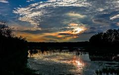 Broekpolder-00321 (Arie van Tilborg) Tags: sunset vlaardingen reigers lepelaars zonsondergangen broekpolder recreatiegebied