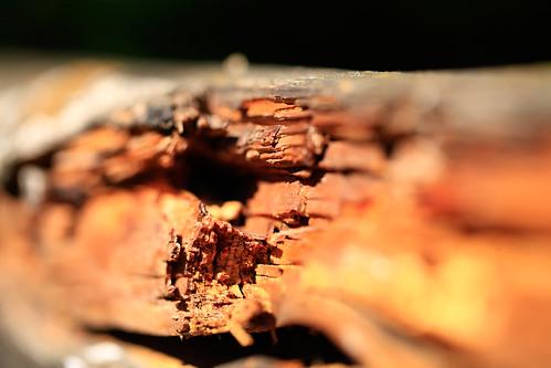 04 Hölzern (aus Holz)