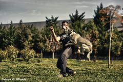Disc-dog 1 (Sobrino de Murphy) Tags: dogs cannes perros hunde chiens собаки