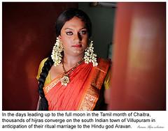 My Community Friends (Husna Hijra) Tags: india asia transgender transvestite crossdresser tamilnadu transsexual mela hijra villupuram aravani aravan koovagam