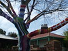 Yarn bombed tree with owls (Figgles1) Tags: trees tree knitting yarn owl knitted bomb fremantle bombing owls guerrilla guerrillaknitting yarnbombing p1080259